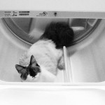 Dryer Cat