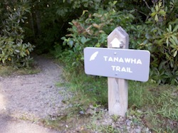 The Tanawha trail blaze is a white feather