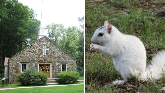 English Chapel (name spelled in stones, ick!) and one of the famous white squirrels of Brevard.