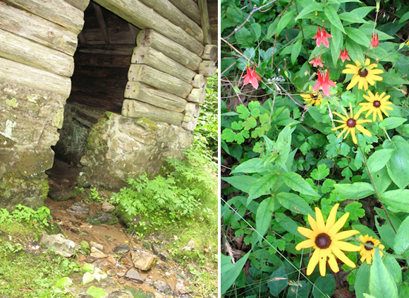 Springhouse entry, columbine and brown-eyed Susans